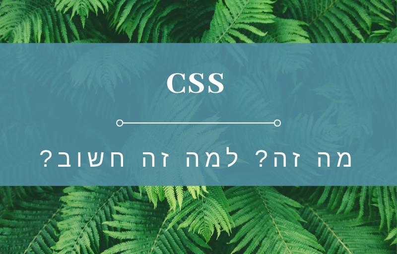 CCS בניית אתר וורדפרס